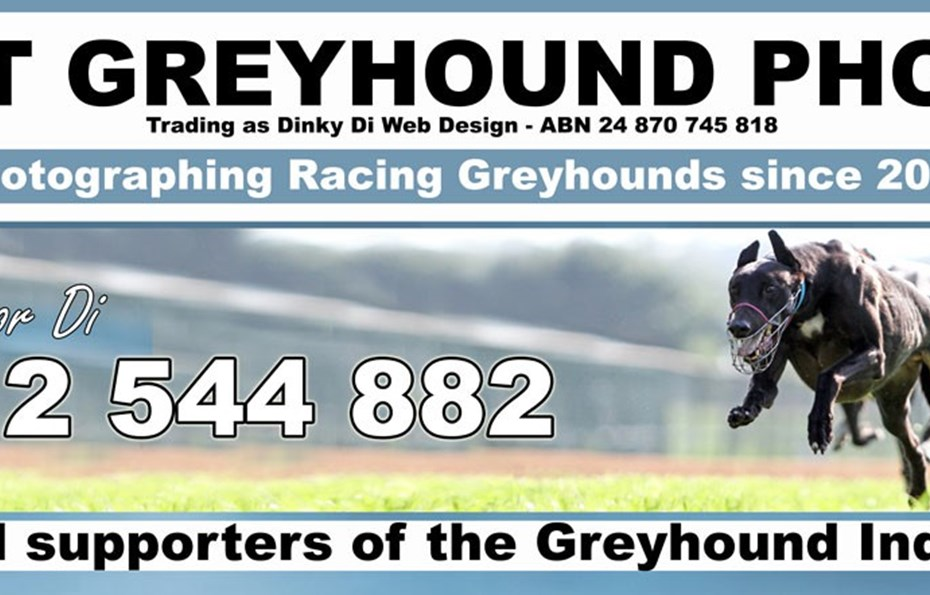 Just Greyhound Photos